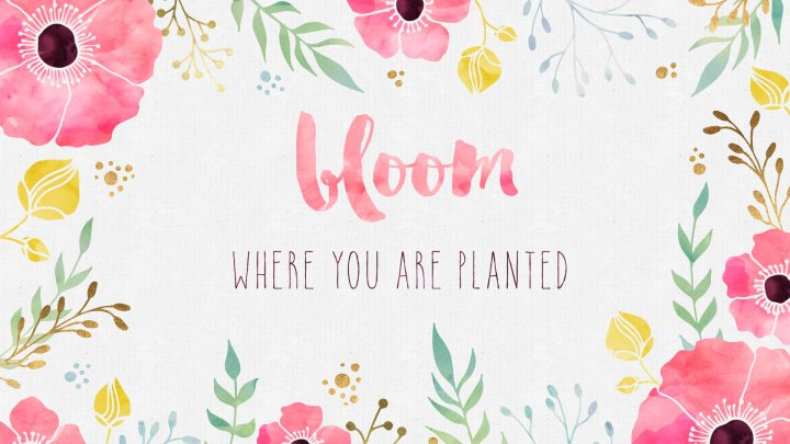 bloom-where-you-are-planted-desktop